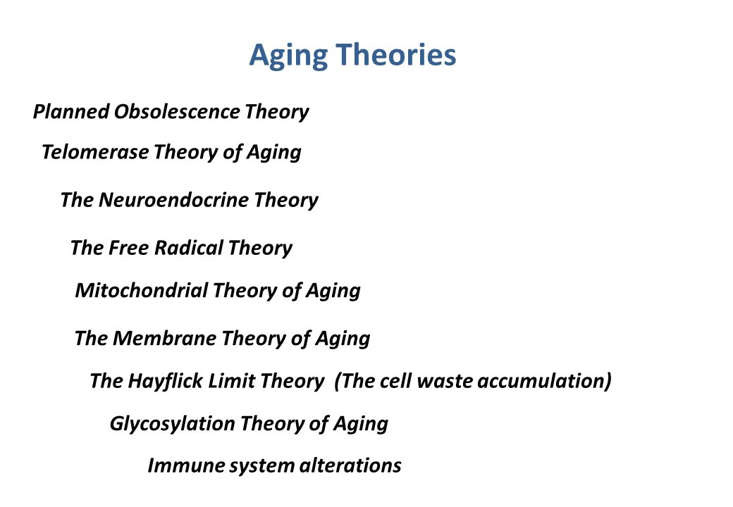 Aging Theories Planned Obsolescence Theory Telomerase Theory of Aging
