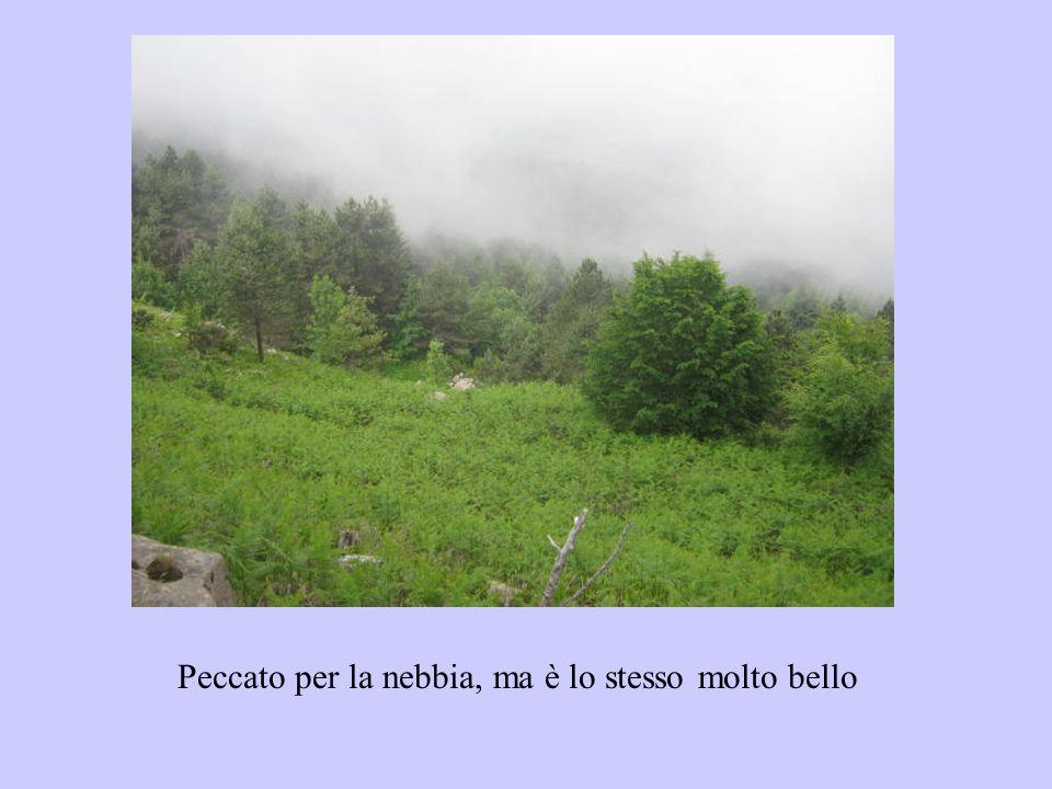 Peccato per la nebbia, ma è lo stesso molto bello