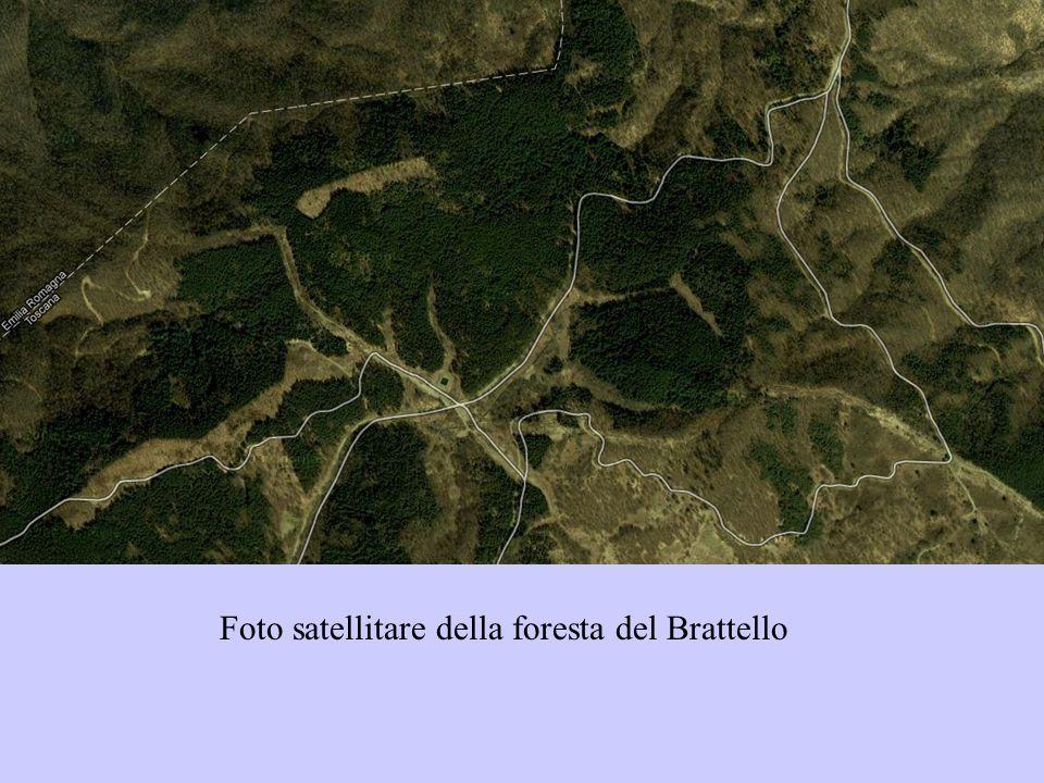 Foto satellitare della foresta del Brattello