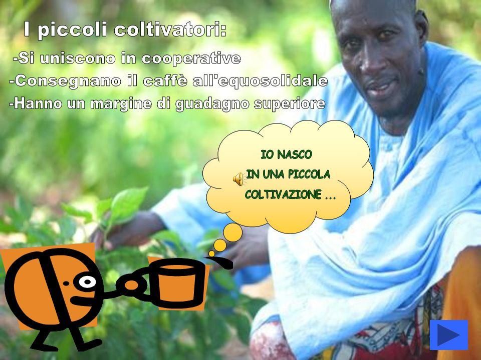 I piccoli coltivatori: -Si uniscono in cooperative