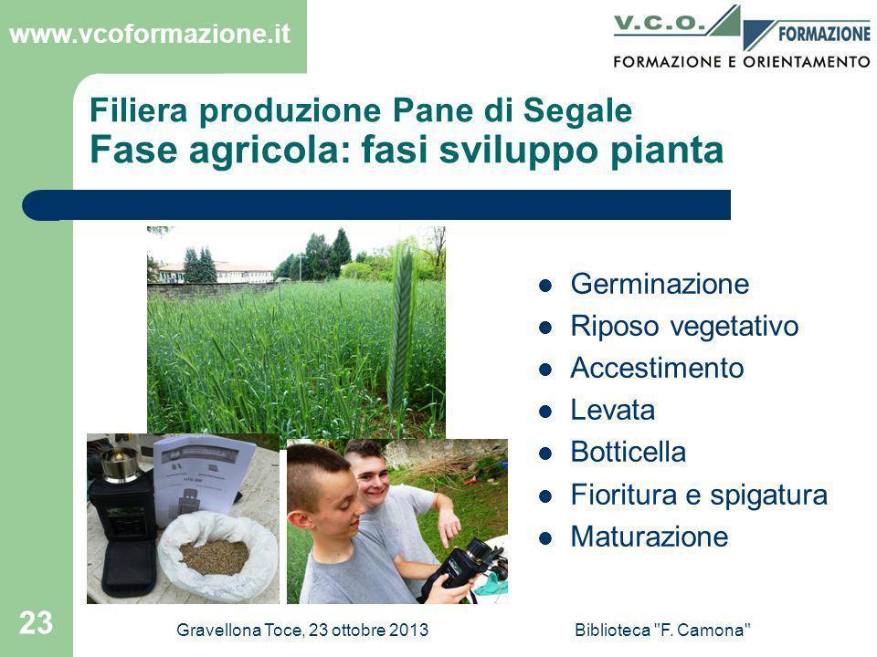 Filiera produzione Pane di Segale Fase agricola: fasi sviluppo pianta