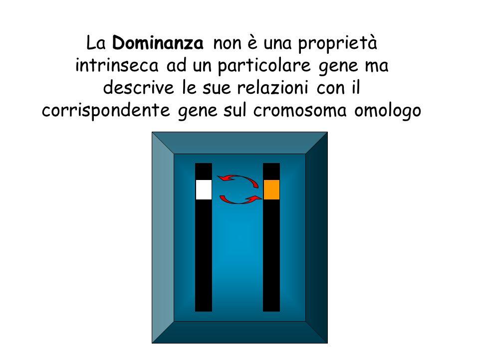 La Dominanza non è una proprietà intrinseca ad un particolare gene ma descrive le sue relazioni con il corrispondente gene sul cromosoma omologo
