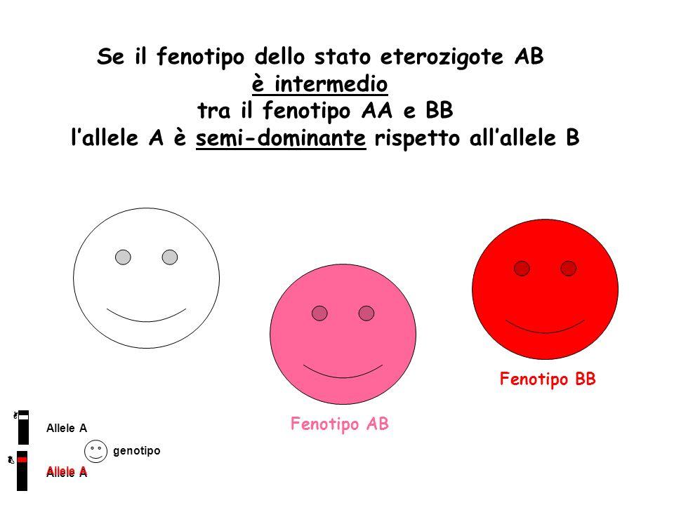Se il fenotipo dello stato eterozigote AB è intermedio