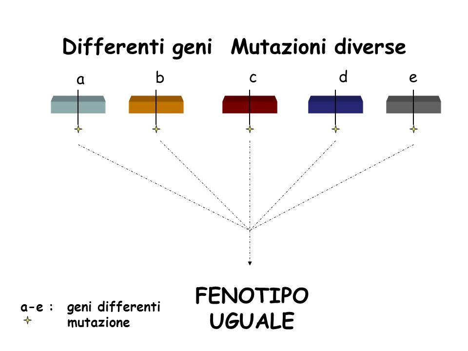 Differenti geni Mutazioni diverse