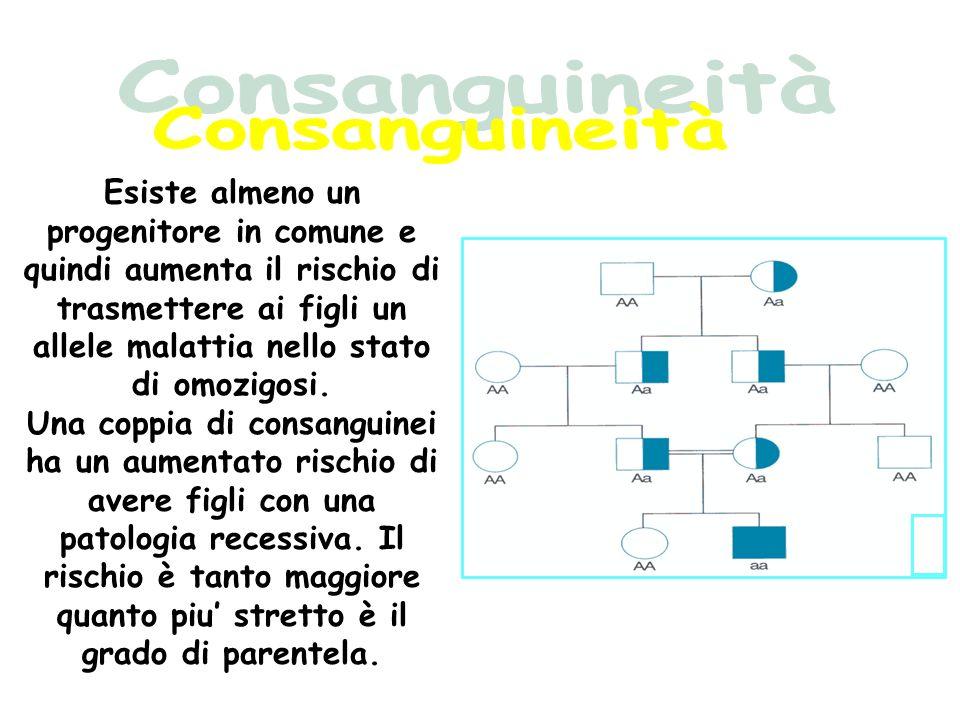 Consanguineità