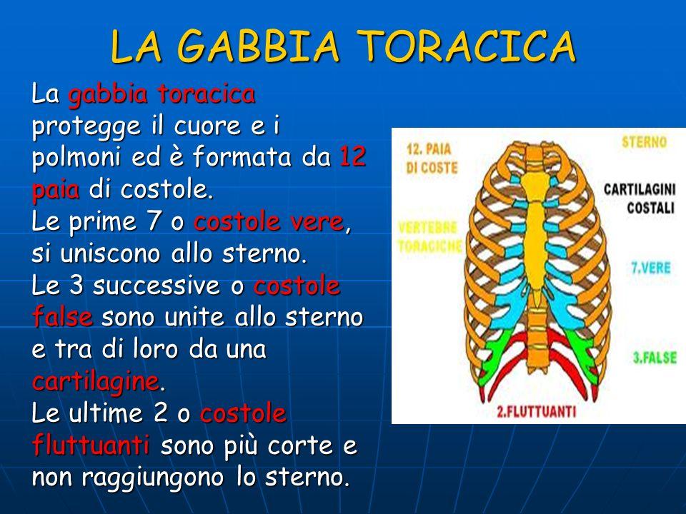 LA GABBIA TORACICA La gabbia toracica protegge il cuore e i