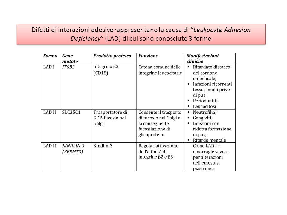 Deficiency (LAD) di cui sono conosciute 3 forme