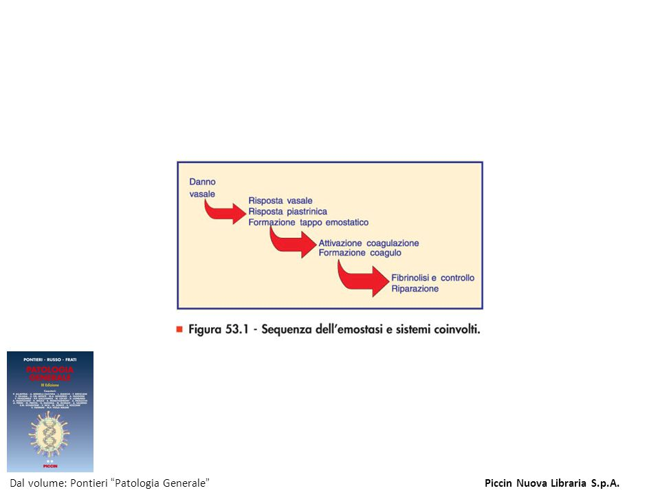 Figura 53.1 - Sequenza dell emostasi e sistemi coinvolti.