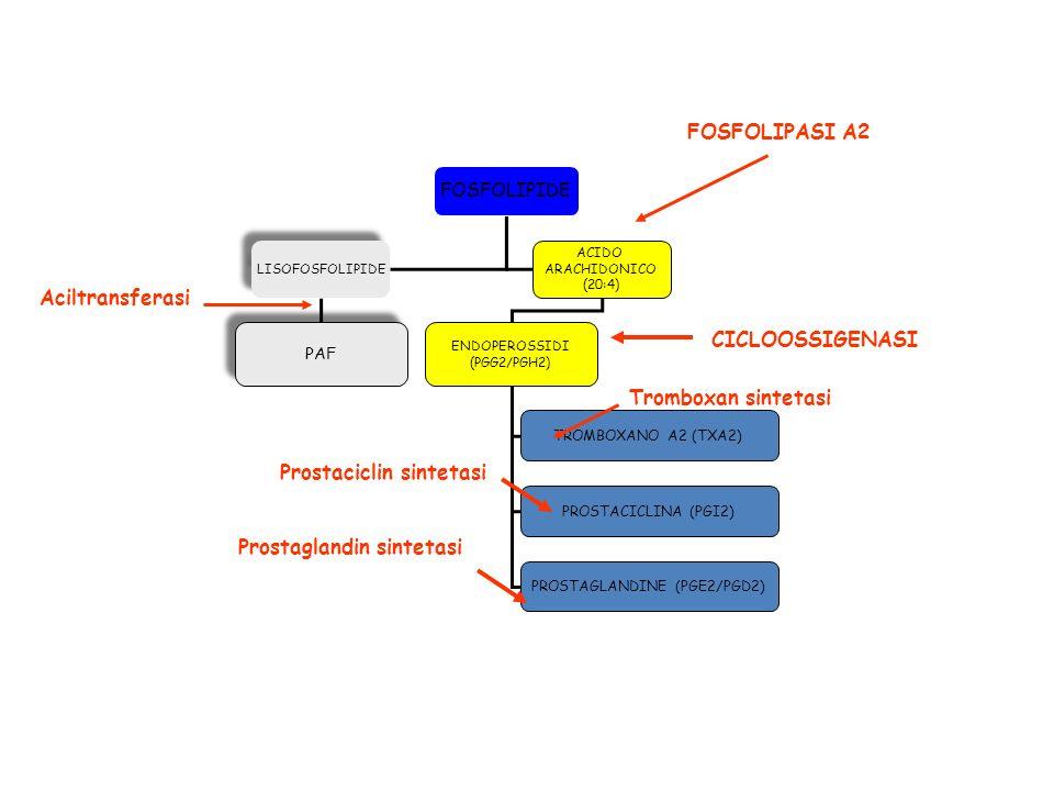 PROSTAGLANDINE (PGE2/PGD2)