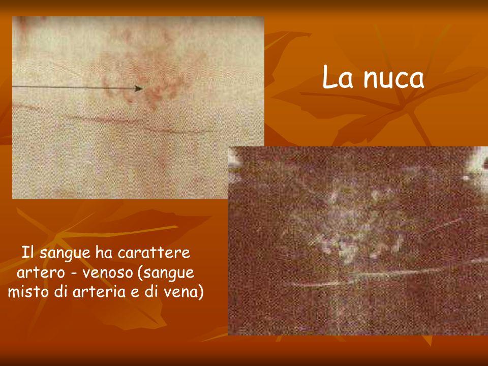 La nuca Il sangue ha carattere artero - venoso (sangue misto di arteria e di vena)