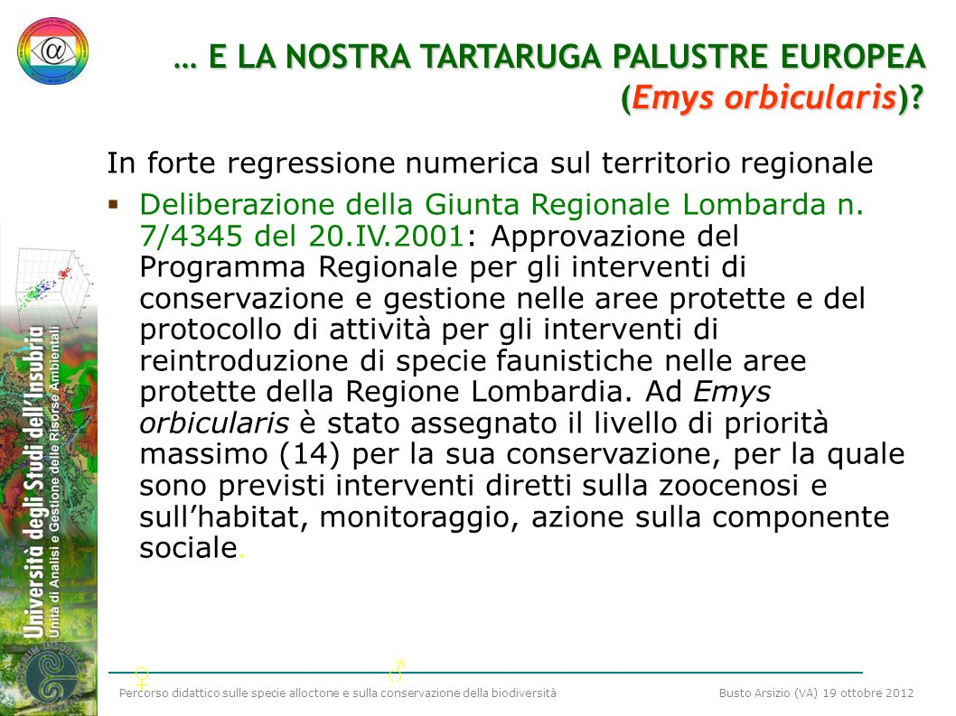 … E LA NOSTRA TARTARUGA PALUSTRE EUROPEA (Emys orbicularis)