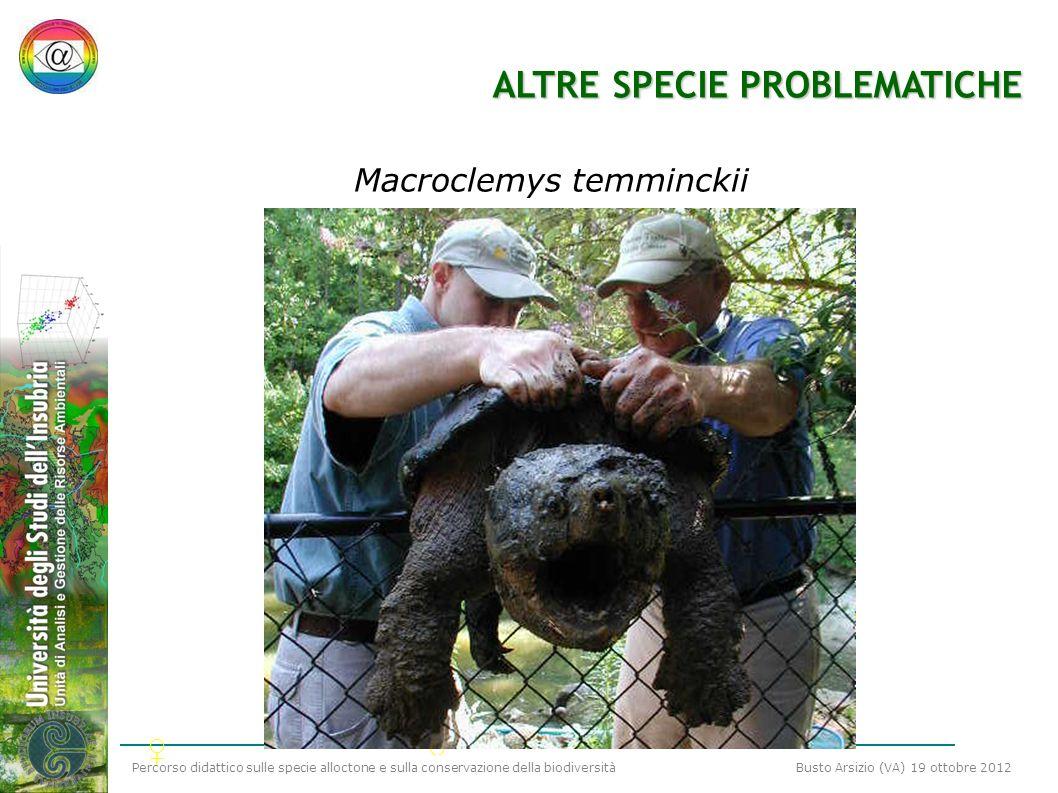 Macroclemys temminckii