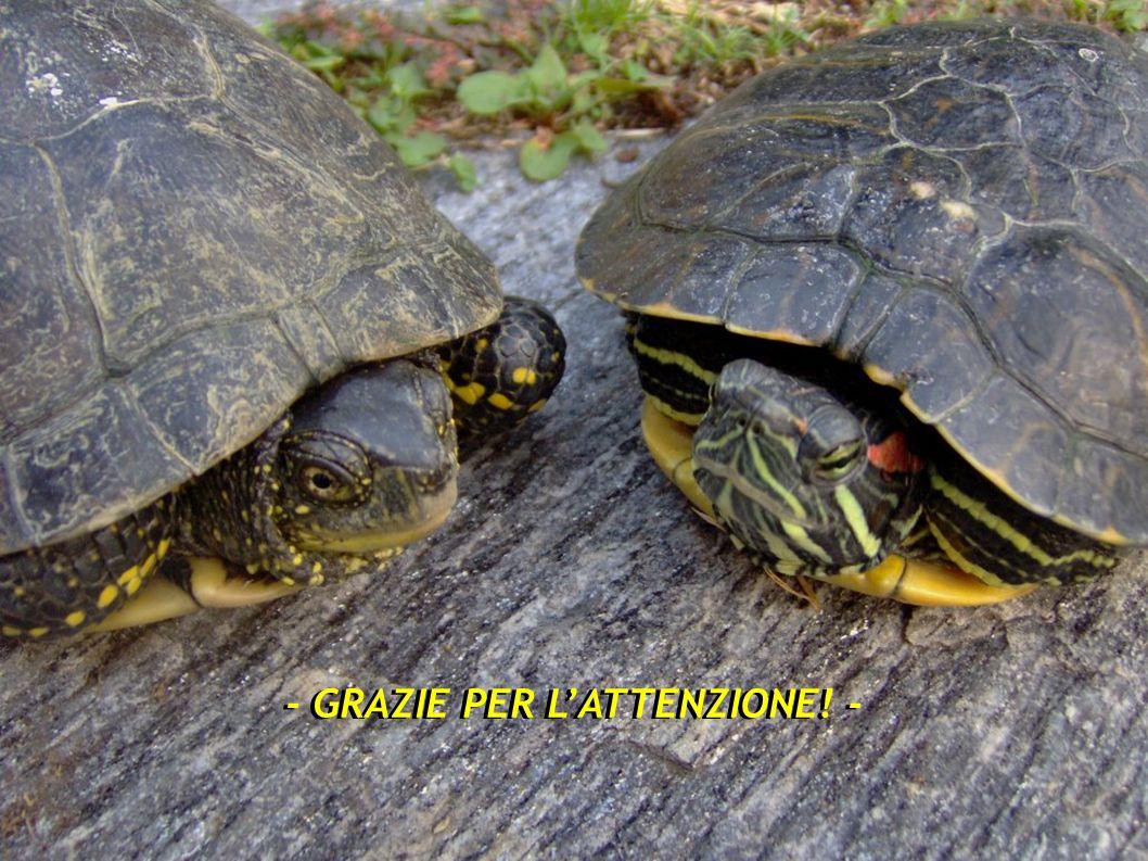 - GRAZIE PER L'ATTENZIONE! -