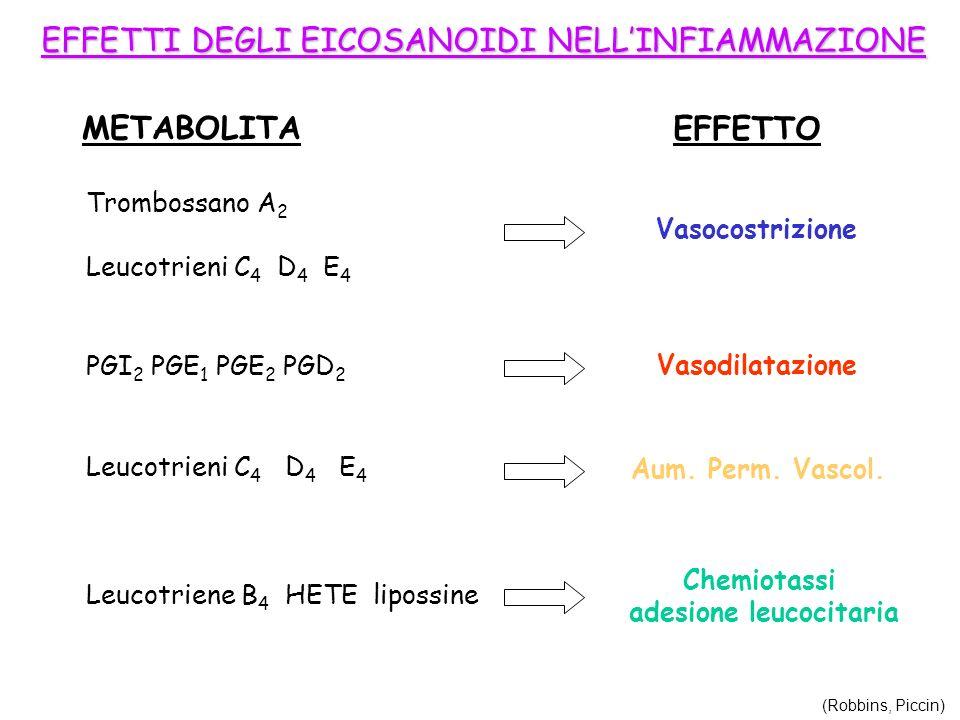 adesione leucocitaria