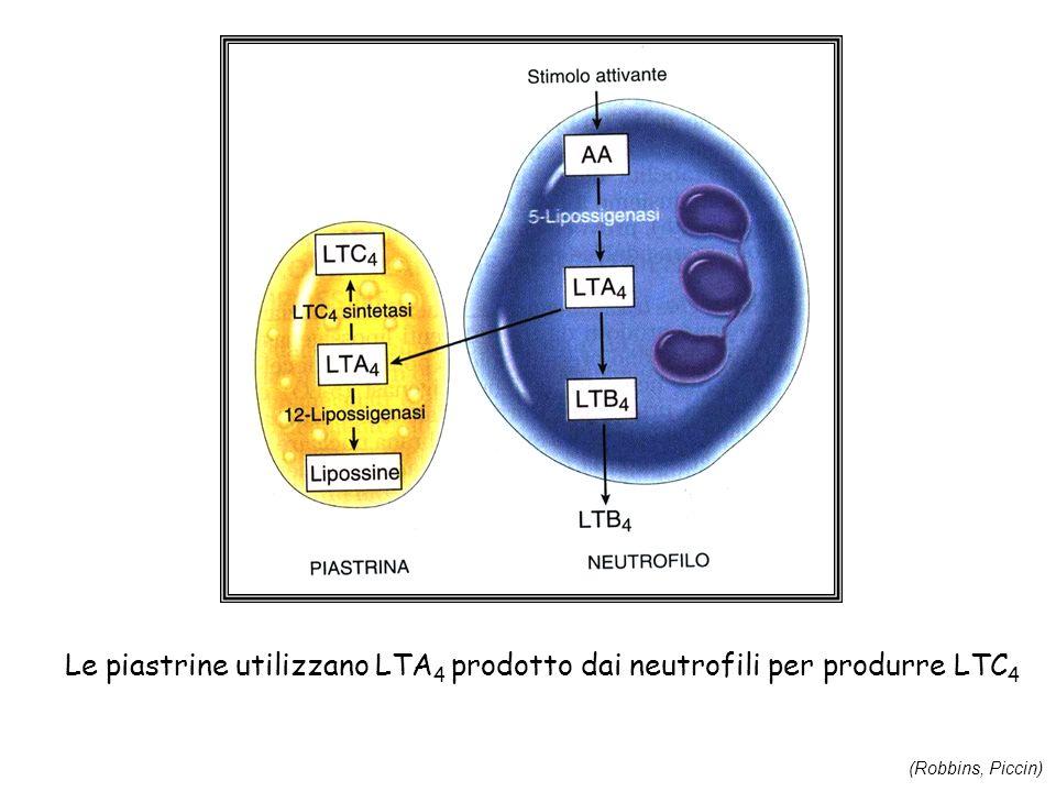 Le piastrine utilizzano LTA4 prodotto dai neutrofili per produrre LTC4