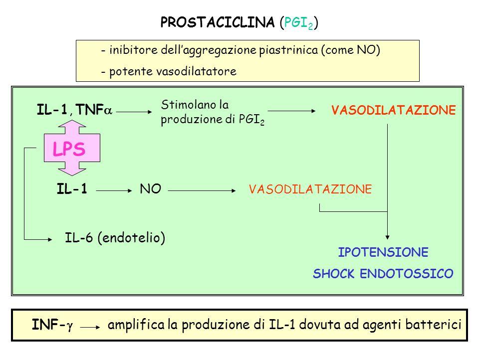 LPS PROSTACICLINA (PGI2) IL-1, TNFa VASODILATAZIONE