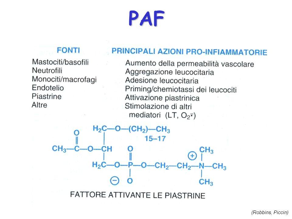 PAF (Robbins, Piccin)