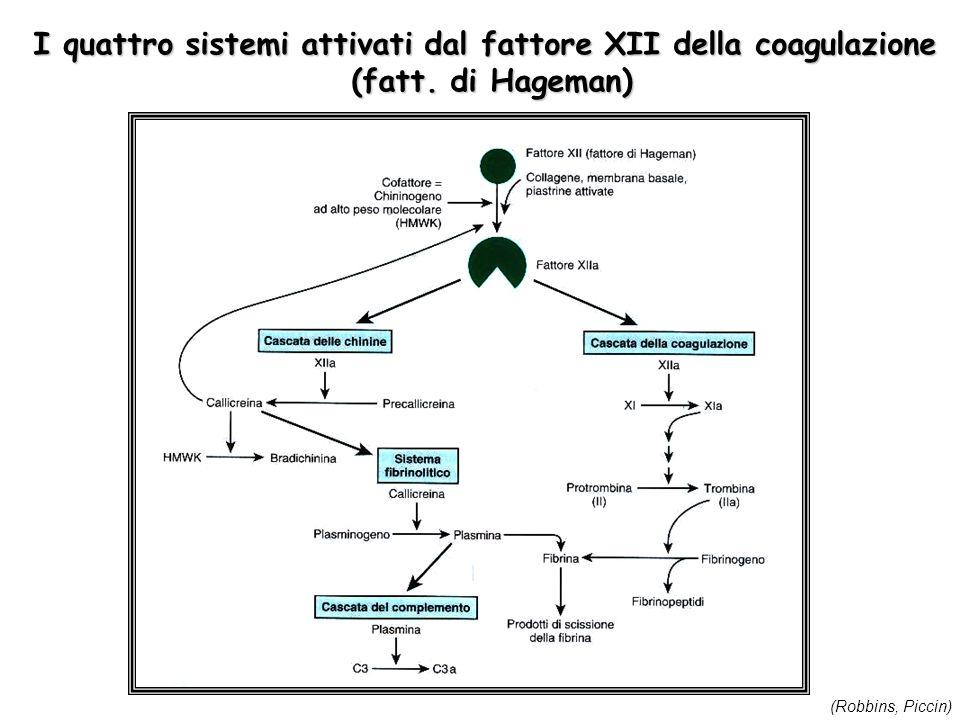 I quattro sistemi attivati dal fattore XII della coagulazione