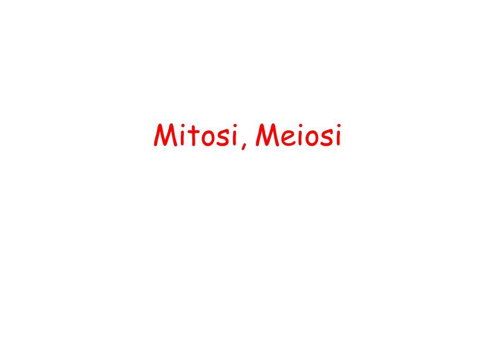 Mitosi, Meiosi