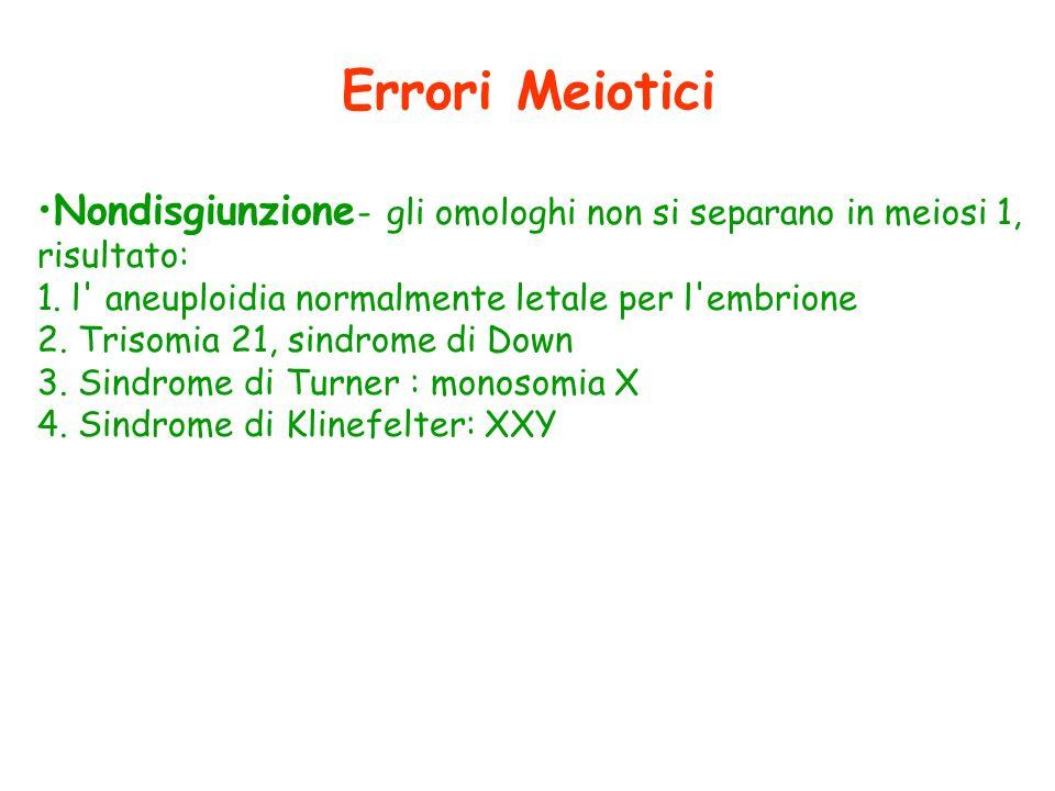 Errori Meiotici Nondisgiunzione- gli omologhi non si separano in meiosi 1, risultato: l aneuploidia normalmente letale per l embrione.