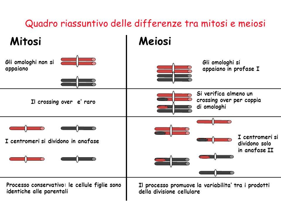 Mitosi Meiosi Quadro riassuntivo delle differenze tra mitosi e meiosi