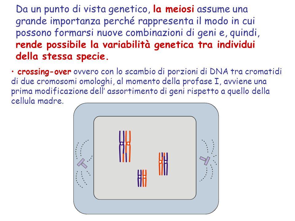 Da un punto di vista genetico, la meiosi assume una grande importanza perché rappresenta il modo in cui possono formarsi nuove combinazioni di geni e, quindi, rende possibile la variabilità genetica tra individui della stessa specie.