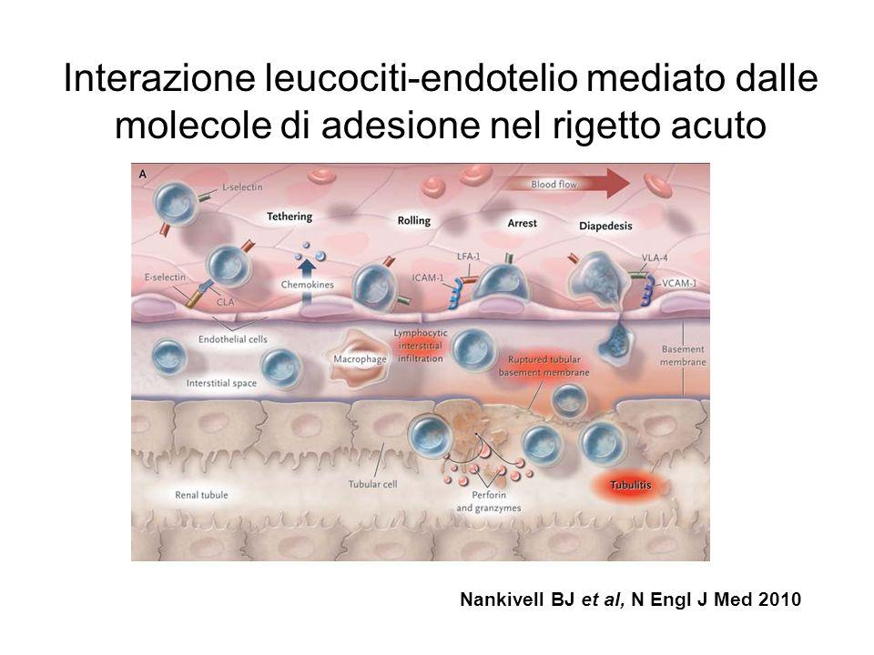 Interazione leucociti-endotelio mediato dalle molecole di adesione nel rigetto acuto