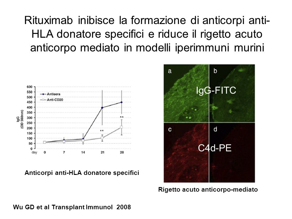 Rituximab inibisce la formazione di anticorpi anti-HLA donatore specifici e riduce il rigetto acuto anticorpo mediato in modelli iperimmuni murini