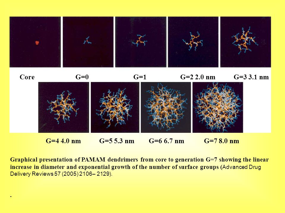Graphical presentation of PAMAM dendrimers from core to generation G=7 showing the linear increase in diameter and exponential growth of the number of surface groups (Advanced Drug Delivery Reviews 57 (2005) 2106– 2129).