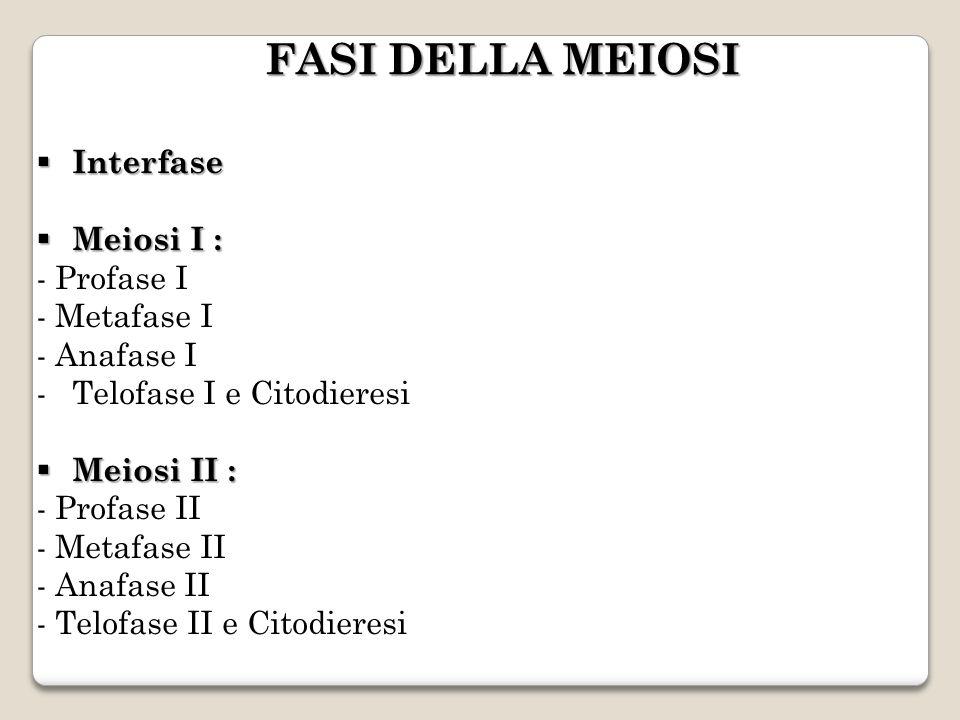 FASI DELLA MEIOSI Interfase Meiosi I : - Profase I - Metafase I