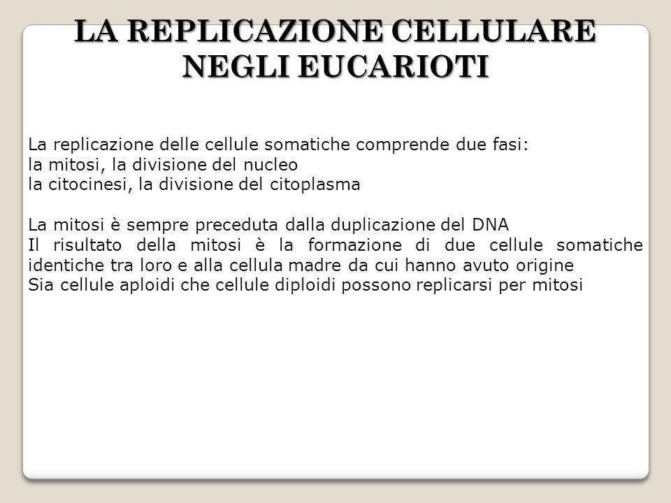 LA REPLICAZIONE CELLULARE NEGLI EUCARIOTI