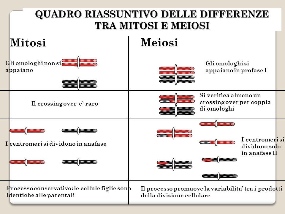QUADRO RIASSUNTIVO DELLE DIFFERENZE TRA MITOSI E MEIOSI