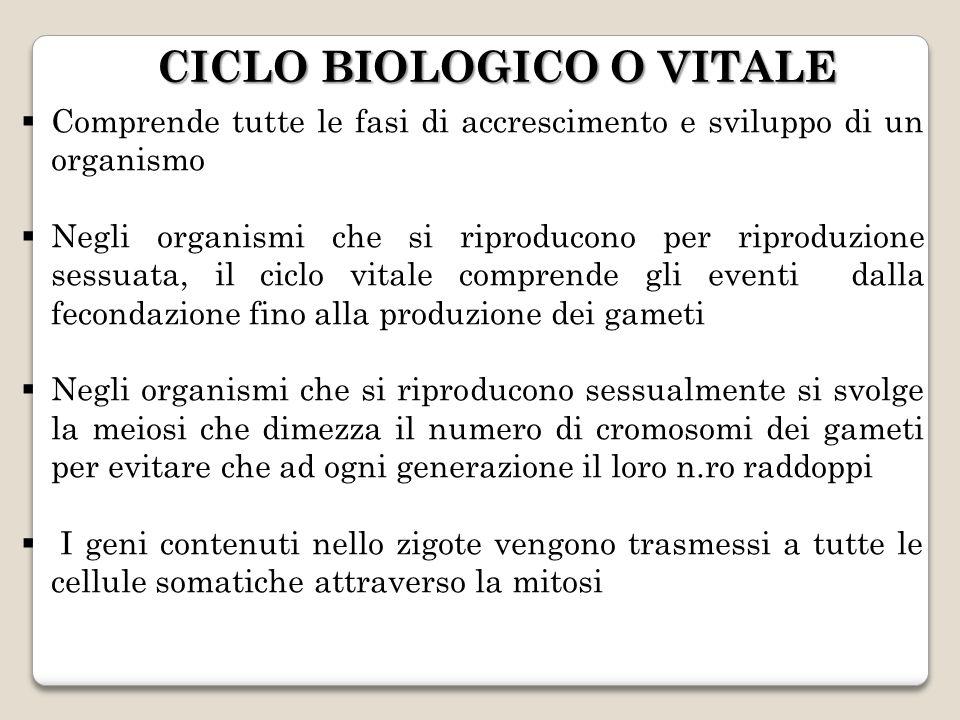 CICLO BIOLOGICO O VITALE