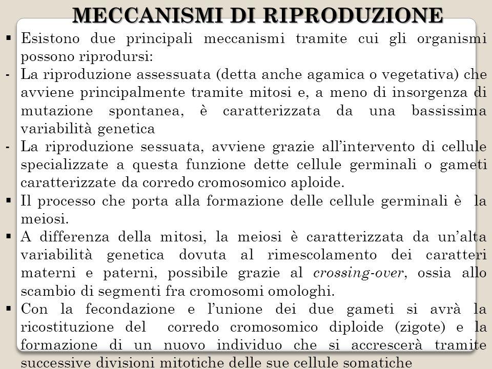 MECCANISMI DI RIPRODUZIONE