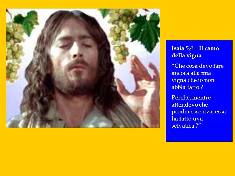 Isaia 5,4 – Il canto della vigna