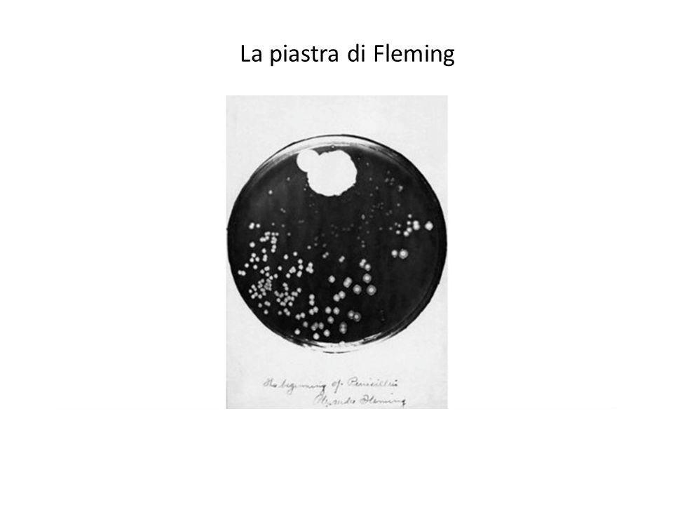 La piastra di Fleming