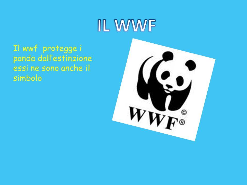 IL WWF Il wwf protegge i panda dall'estinzione essi ne sono anche il simbolo