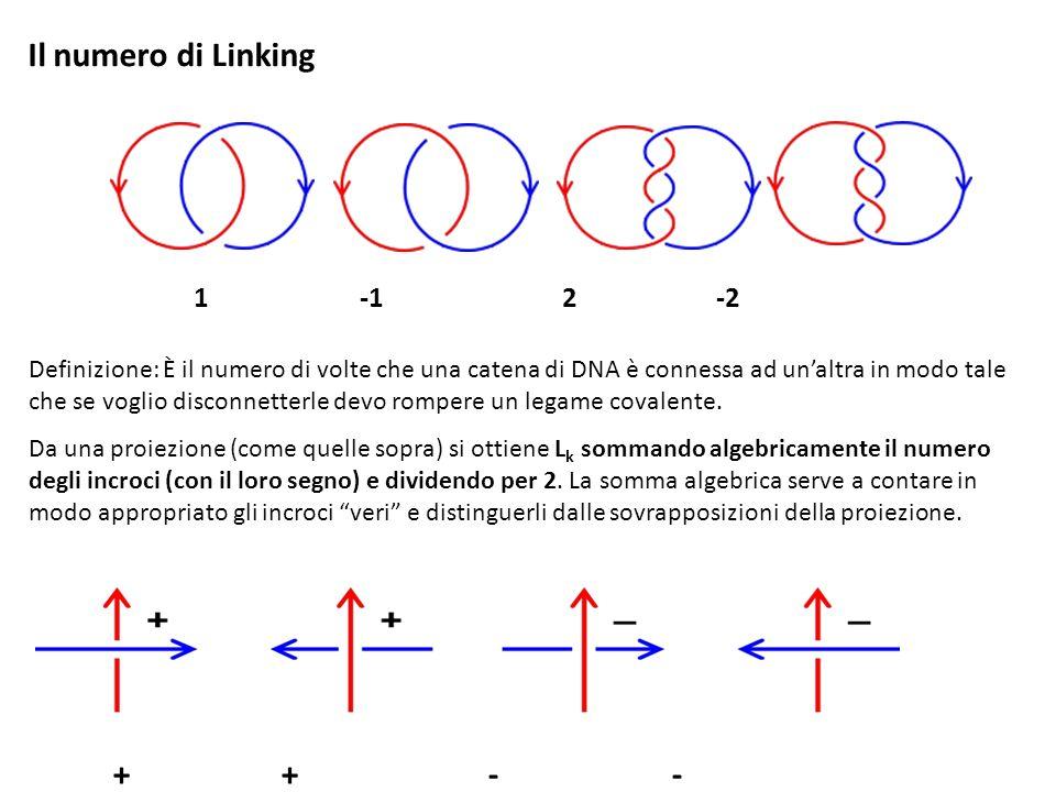 Il numero di Linking 1 -1 2 -2.