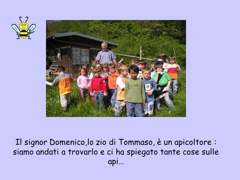 Il signor Domenico,lo zio di Tommaso, è un apicoltore : siamo andati a trovarlo e ci ha spiegato tante cose sulle api…