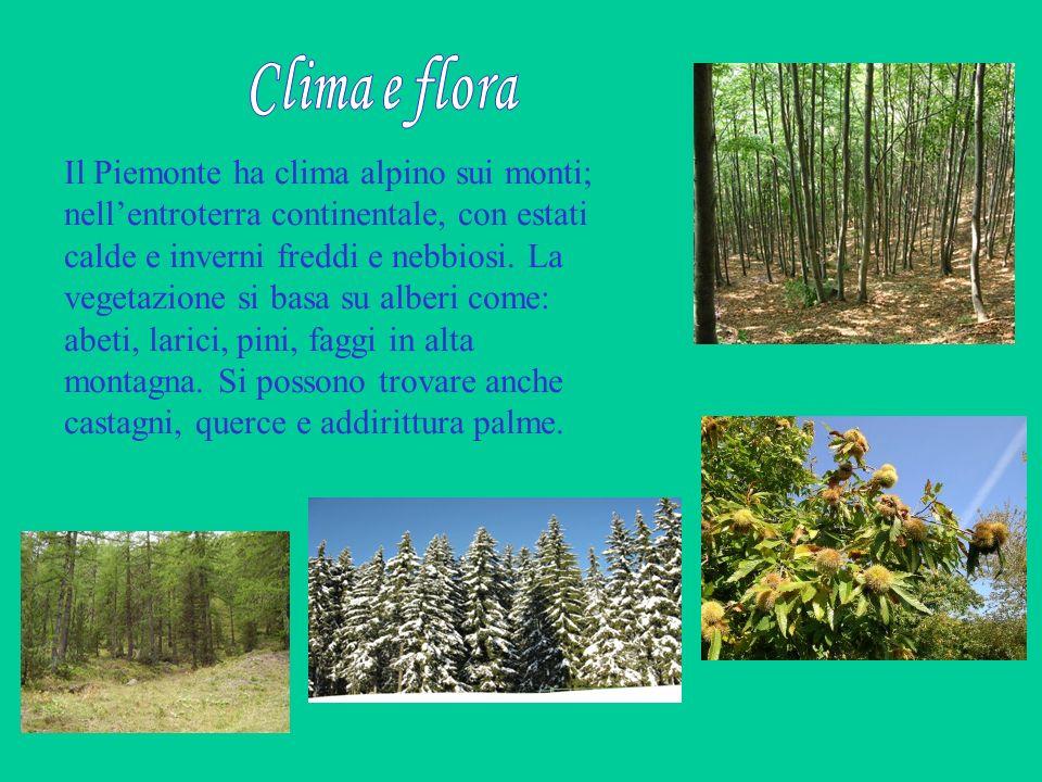 Clima e flora