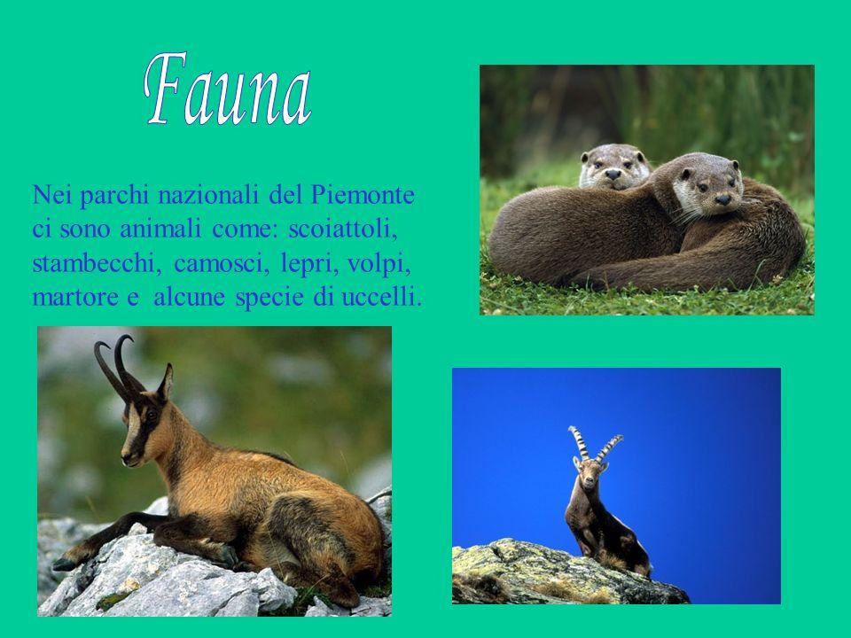 Fauna Nei parchi nazionali del Piemonte ci sono animali come: scoiattoli, stambecchi, camosci, lepri, volpi, martore e alcune specie di uccelli.