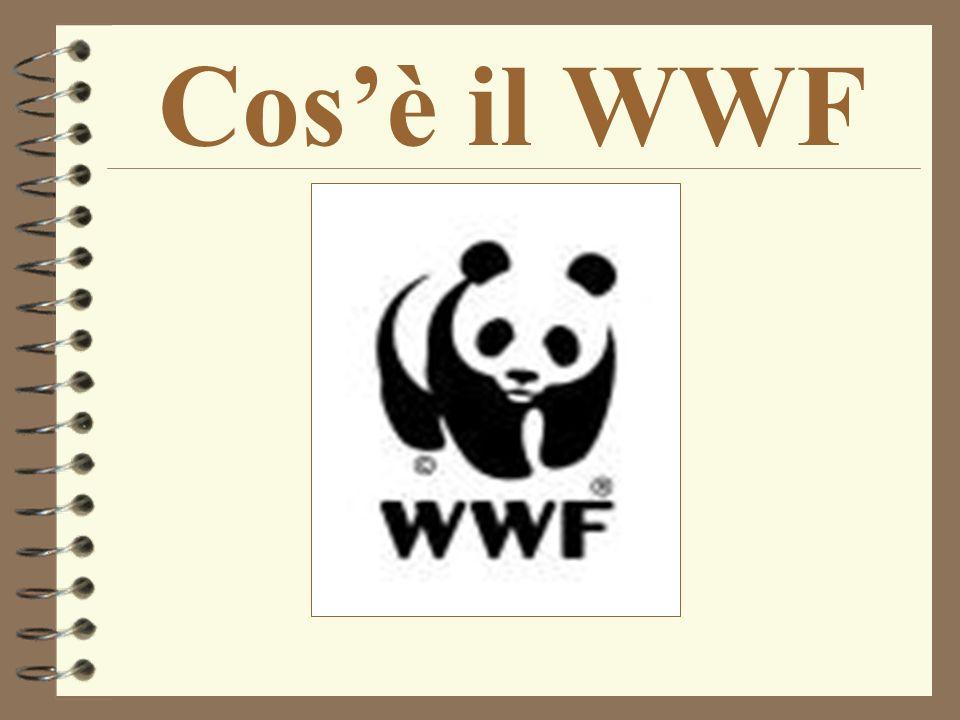 Cos'è il WWF