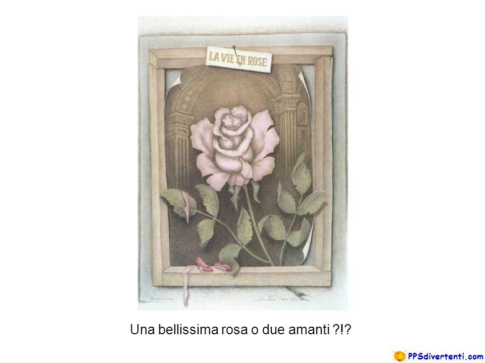 Una bellissima rosa o due amanti !