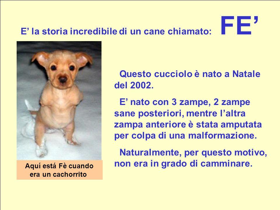 E' la storia incredibile di un cane chiamato: FE'