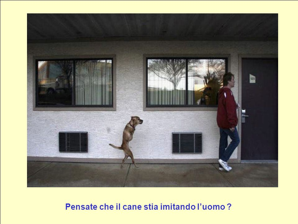 Pensate che il cane stia imitando l'uomo