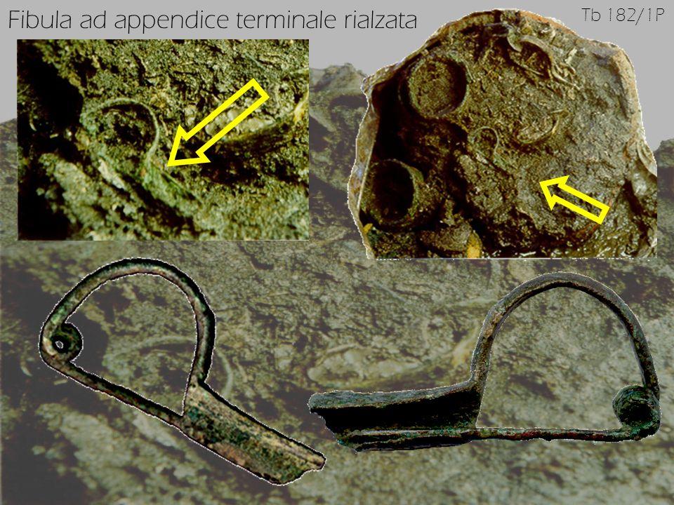 Fibula ad appendice terminale rialzata
