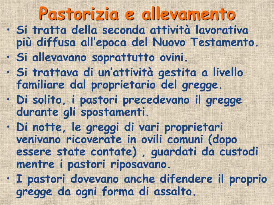 Pastorizia e allevamento