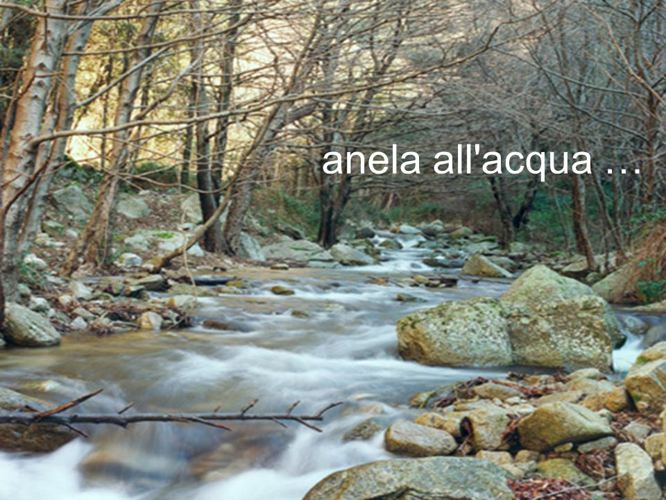 anela all acqua …