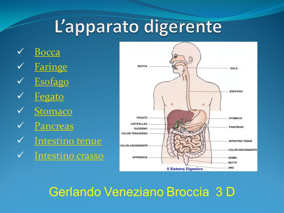 L'apparato digerente Gerlando Veneziano Broccia 3 D Bocca Faringe