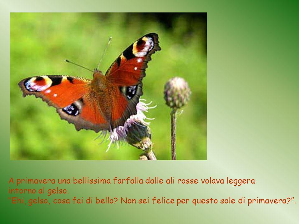 A primavera una bellissima farfalla dalle ali rosse volava leggera